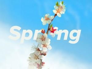 some-spring-blossom